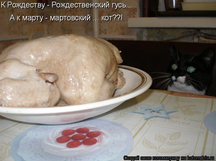 Котоматрица: К Рождеству - Рождественский гусь... А к марту - мартовский ... кот??!