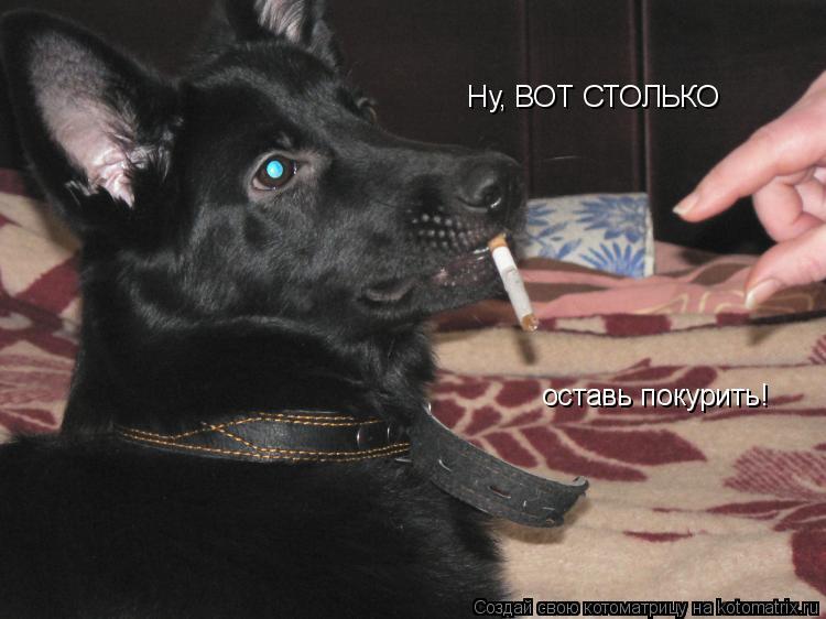 Котоматрица: Ну, ВОТ СТОЛЬКО оставь покурить!
