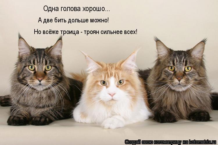 Котоматрица: Одна голова хорошо... А две бить дольше можно! Но всёже троица - троян сильнее всех!