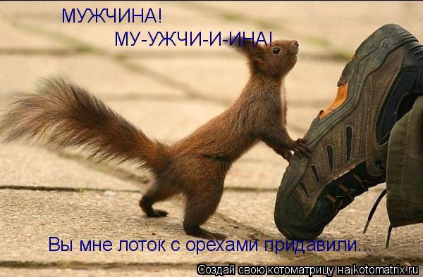 Котоматрица: МУЖЧИНА! МУ-УЖЧИ-И-ИНА! Вы мне лоток с орехами придавили...