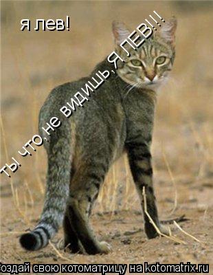 Котоматрица: я лев! ты что,не видишь,Я ЛЕВ!!!