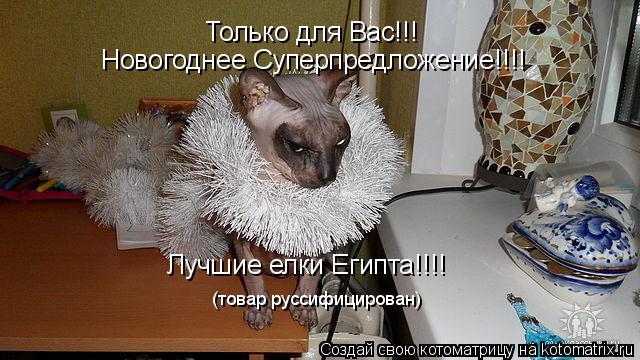 Котоматрица: Только для Вас!!!  Новогоднее Суперпредложение!!!! Лучшие елки Египта!!!! (товар руссифицирован)