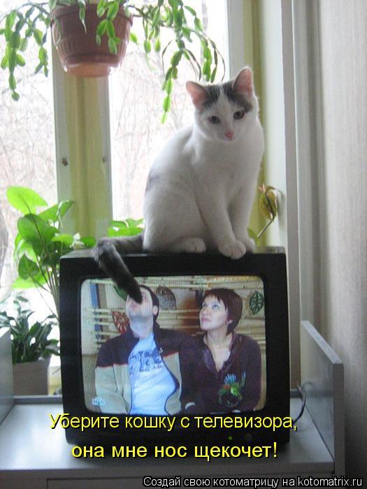 Котоматрица: Уберите кошку с телевизора, она мне нос щекочет!