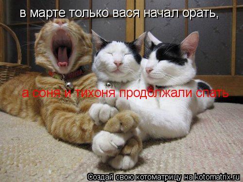 Котоматрица: в марте только вася начал орать, а соня и тихоня продолжали спать
