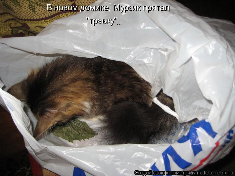 "Котоматрица: В новом домике, Мурзик прятал ""травку"" ..."