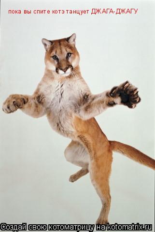 Котоматрица: пока вы спите котэ танцует ДЖАГА-ДЖАГУ