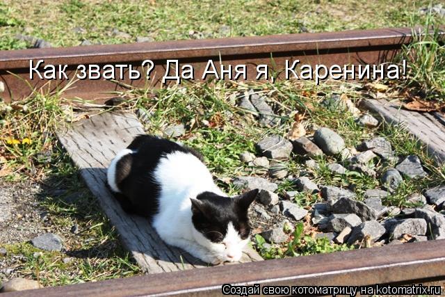 Котоматрица: Как звать? Да Аня я, Каренина!