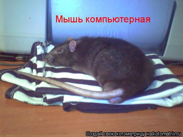 Котоматрица: Мышь компьютерная