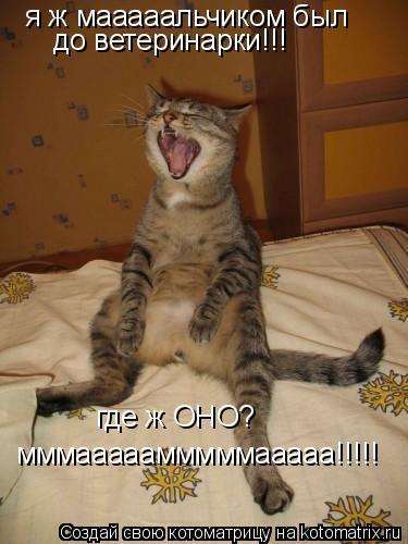 Котоматрица: я ж мааааальчиком был до ветеринарки!!! где ж ОНО? мммааааамммммааааа!!!!!