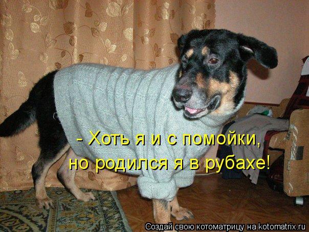 Котоматрица: - Хоть я и с помойки, но родился я в рубахе!