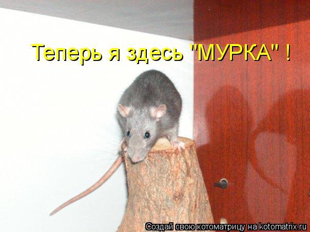"Котоматрица: Теперь я здесь ""МУРКА"" !"