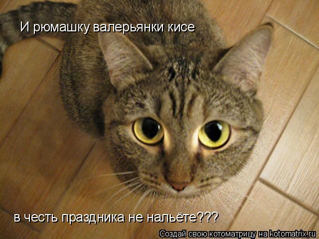 Котоматрица: И рюмашку валерьянки кисе в честь праздника не нальёте???