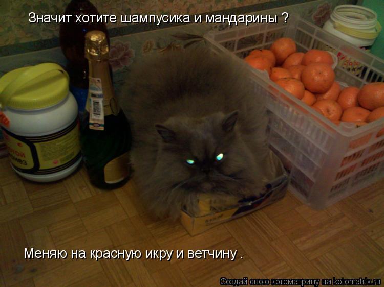 Котоматрица: Значит хотите шампусика и мандарины ? Меняю на красную икру и ветчину .