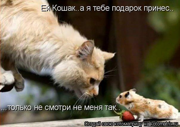 Котоматрица: Ей Кошак..а я тебе подарок принес.. ...только не смотри не меня так..