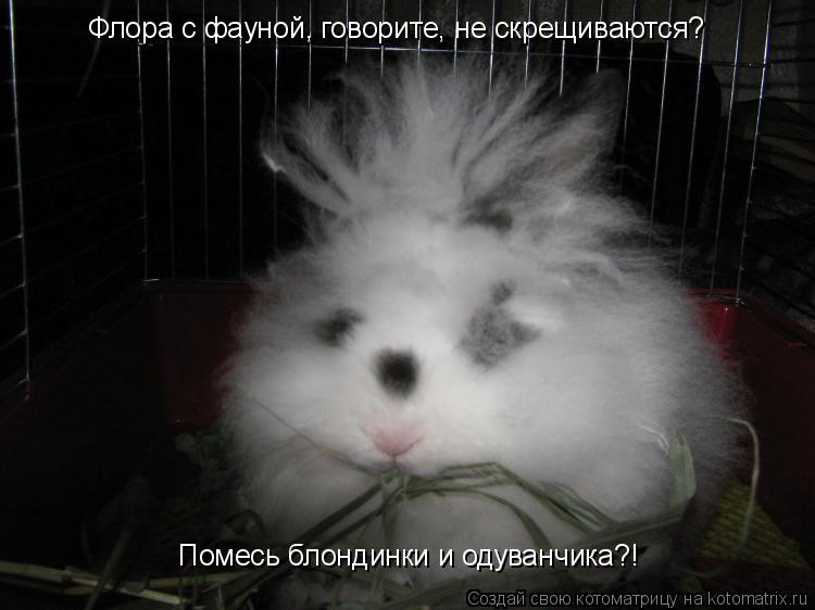 Котоматрица: Флора с фауной, говорите, не скрещиваются?   Помесь блондинки и одуванчика?!
