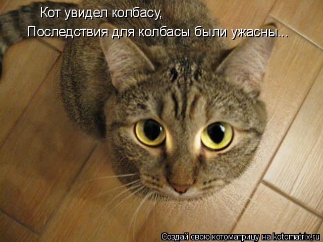 Котоматрица: Кот увидел колбасу, Последствия для колбасы были ужасны...