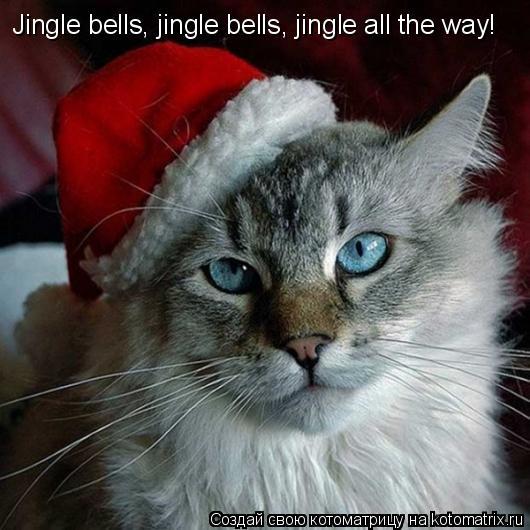 Котоматрица: Jingle bells, jingle bells, jingle all the way!