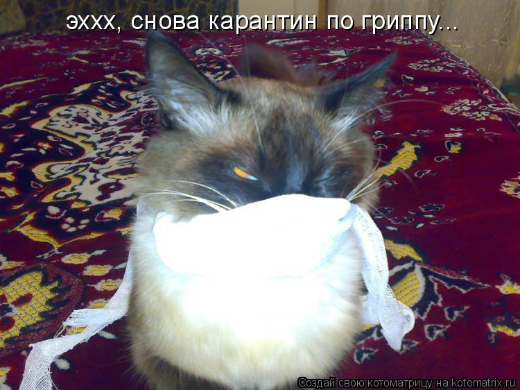 Котоматрица: эххх, снова карантин по гриппу...