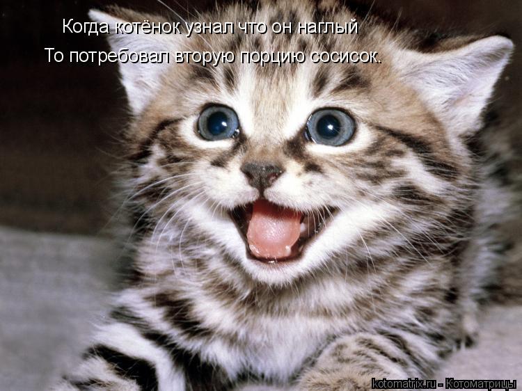 Котоматрица: Когда котёнок узнал что он наглый То потребовал вторую порцию сосисок.
