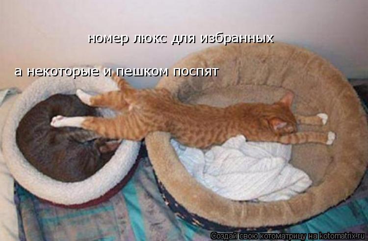 Котоматрица: номер люкс для избранных а некоторые и пешком поспят