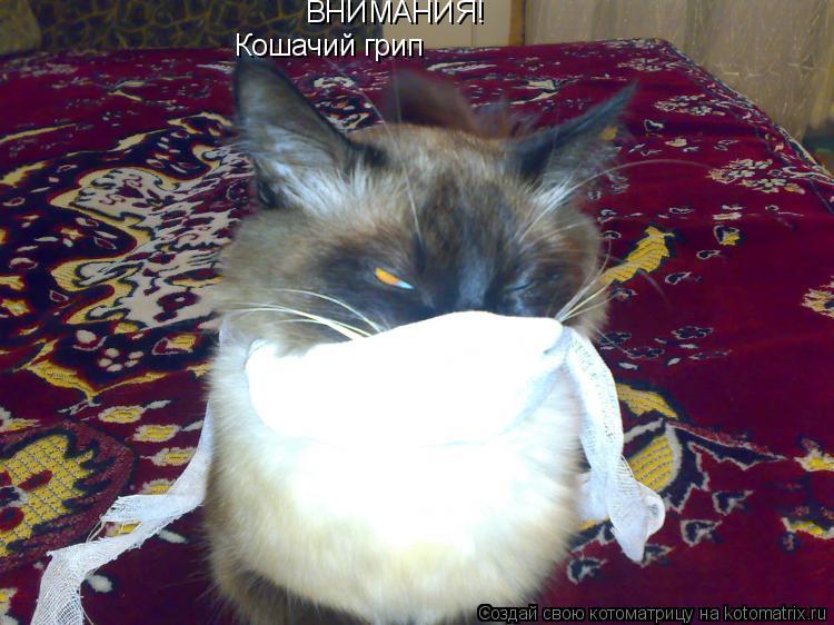 Котоматрица: ВНИМАНИЯ! Кошачий грип