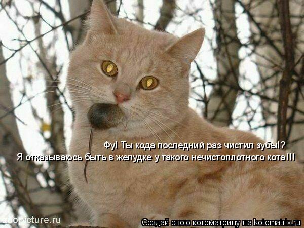 Котоматрица: Фу! Ты кода последний раз чистил зубы!? Я отказываюсь быть в желудке у такого нечистоплотного кота!!!