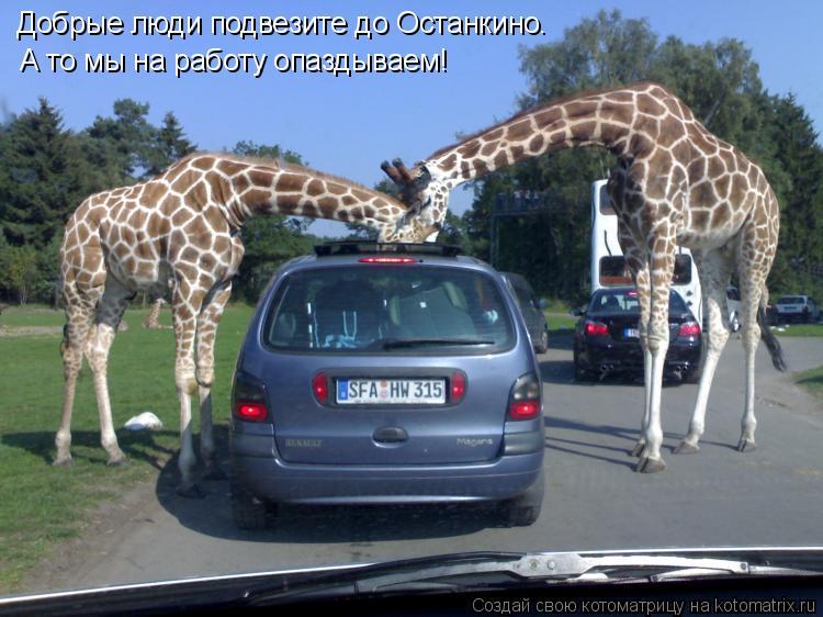 Котоматрица: Добрые люди подвезите до Останкино , а то мы на работу опаздываем! Добрые люди подвезите до Останкино  . . А то мы на работу опаздываем!