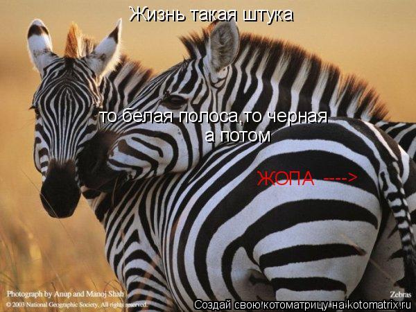 Котоматрица: Жизнь такая штука то белая полоса,то черная а потом ЖОПА ---->