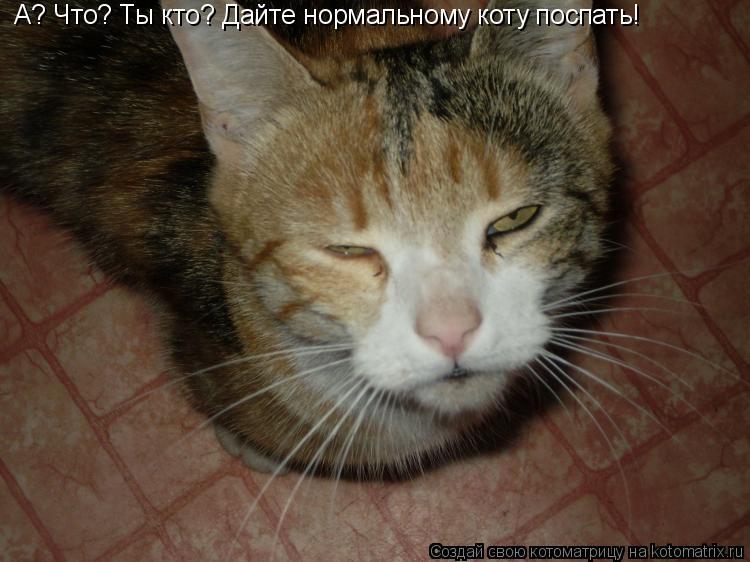 Котоматрица: А? Что? Ты кто? Дайте нормальному коту поспать!