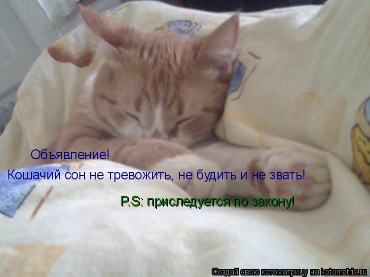 Котоматрица: Объявление! Кошачий сон не тревожить, не будить и не звать! P.S: приследуется по закону!