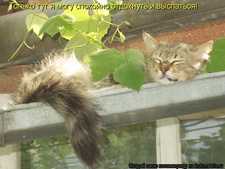 Котоматрица: Только тут я могу спокойно отдохнуть и выспаться!