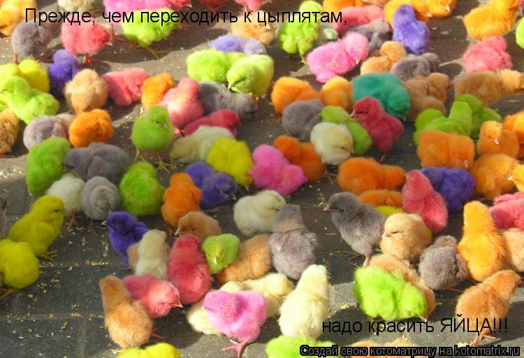 Котоматрица: Прежде, чем переходить к цыплятам, надо красить ЯЙЦА!!!