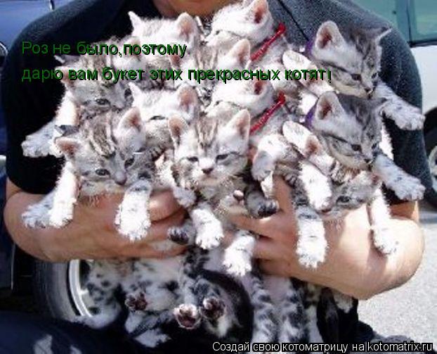 Котоматрица: Роз не было,поэтому дарю вам букет этих прекрасных котят !