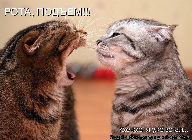Котоматрица: РОТА, ПОДЪЕМ!!! Кхе-кхе, я уже встал...