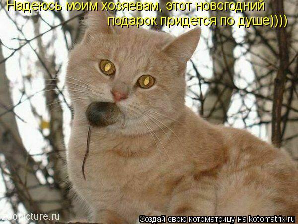 Котоматрица: Надеюсь моим хозяевам, этот новогодний  подарок придется по душе))))