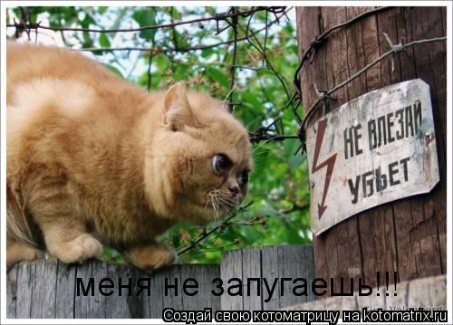 Котоматрица: меня не запугаешь!!!