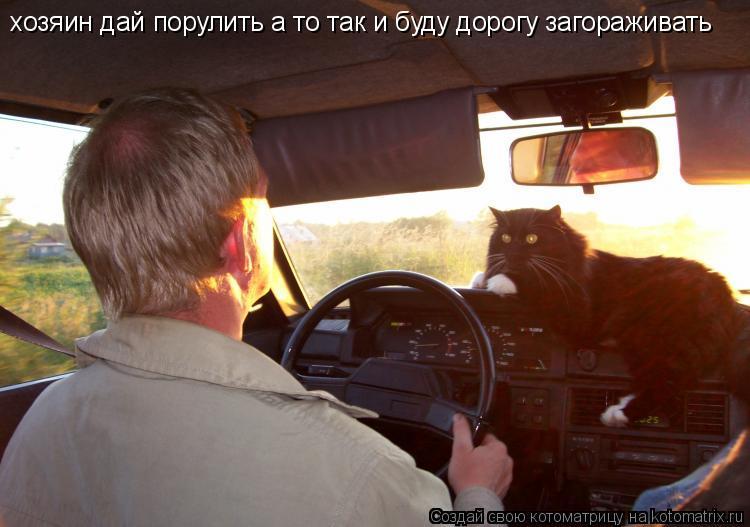 Котоматрица: хозяин дай порулить а то так и буду хозяин дай порулить а то так и буду дорогу загораживать