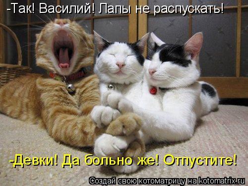 Котоматрица: -Так! Василий! Лапы не распускать! -Девки! Да больно же! Отпустите!