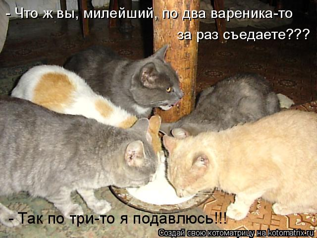 Котоматрица: за раз съедаете??? - Так по три-то я подавлюсь!!! - Что ж вы, милейший, по два вареника-то