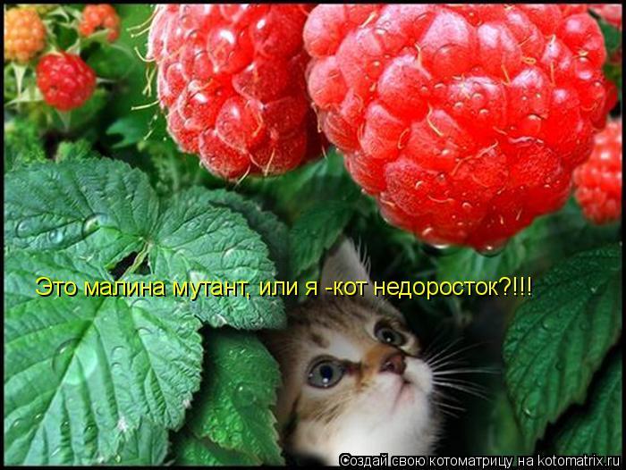 Котоматрица: Это малина мутант, или я -кот недоросток?!!!