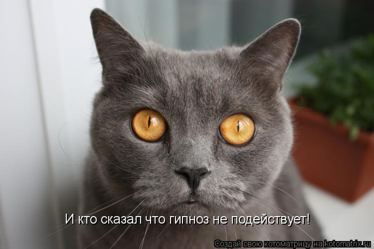 Котоматрица: И кто сказал что гипноз не подействует!
