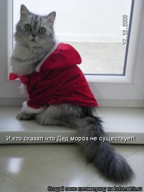 Котоматрица: И,кто сказал что Дед мороз не существует!