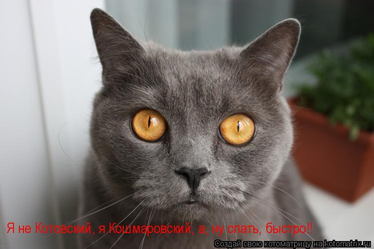 Котоматрица: Я не Котовский, я Кошмаровский, а, ну спать, быстро!!