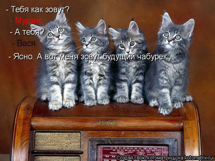 Котоматрица: - Тебя как зовут?  - Мурзик  - А тебя?  - Вася  - Ясно. А вот меня зовут будущий чабурек...