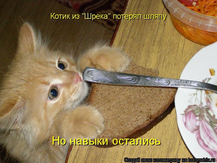 """Котоматрица: Котик из """"Шрека"""" потерял шляпу Но навыки остались"""