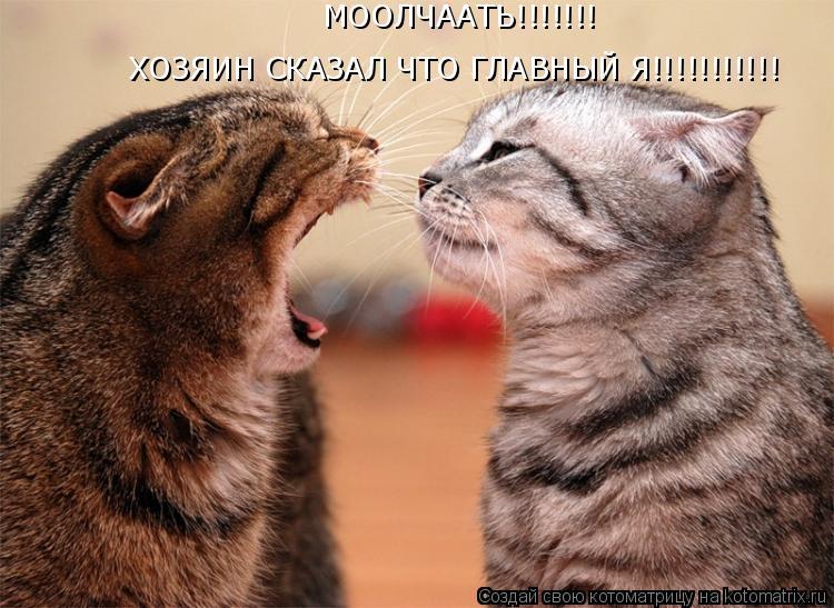 Котоматрица: МООЛЧААТЬ!!!!!!! ХОЗЯИН СКАЗАЛ ЧТО ГЛАВНЫЙ Я!!!!!!!!!!!