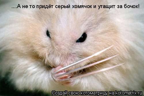 Котоматрица: ....А не то придёт серый хомячок и утащит за бочок!