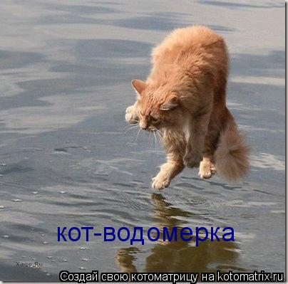 Котоматрица: кот-водомерка