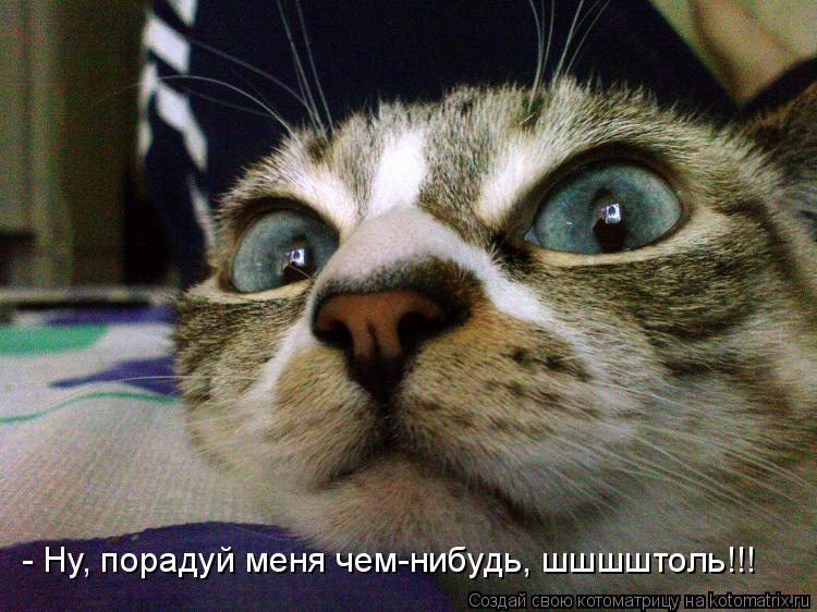 Котоматрица: - Ну, порадуй меня чем-нибудь, шшшштоль!!!