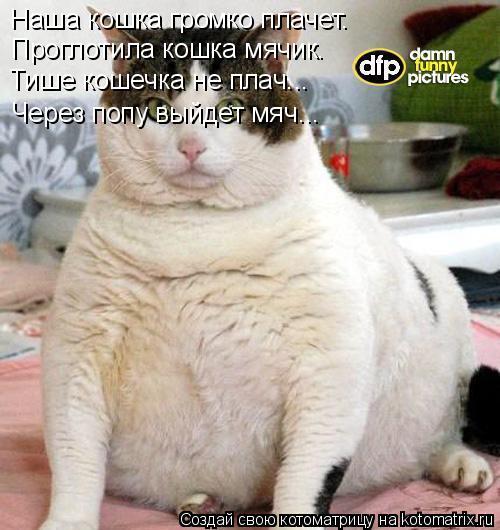 Котоматрица: Наша кошка громко плачет. Проглотила кошка мячик. Тише кошечка не плач... Через попу выйдет мяч...